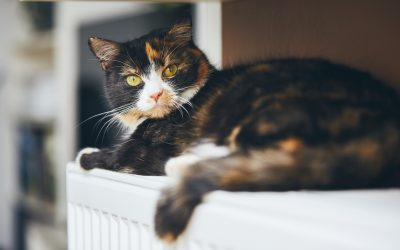 10 Tips To Keep Warm This Winter